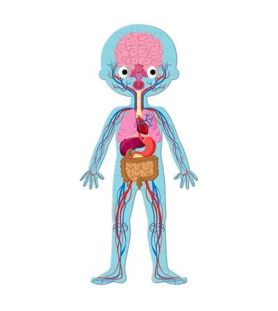 puzzle educativo cuerpo humano organos