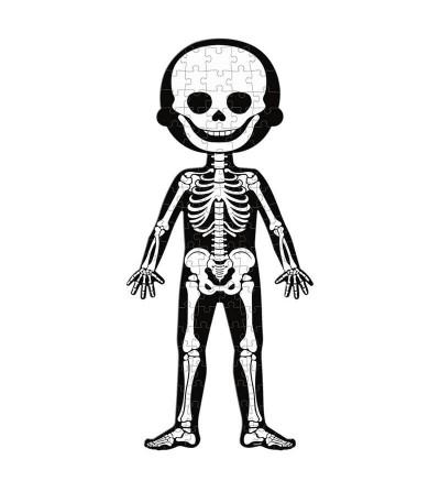 puzzle educativo esqueleto