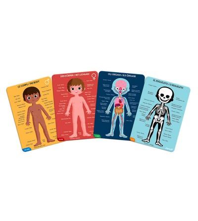 puzzle educativo cuerpo humano contenido